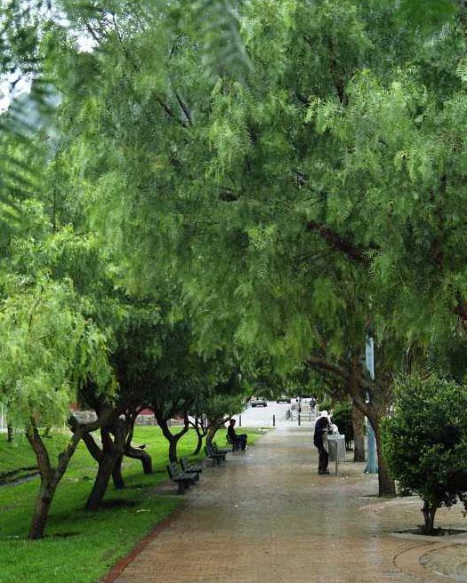Scent of Rain (2/2)